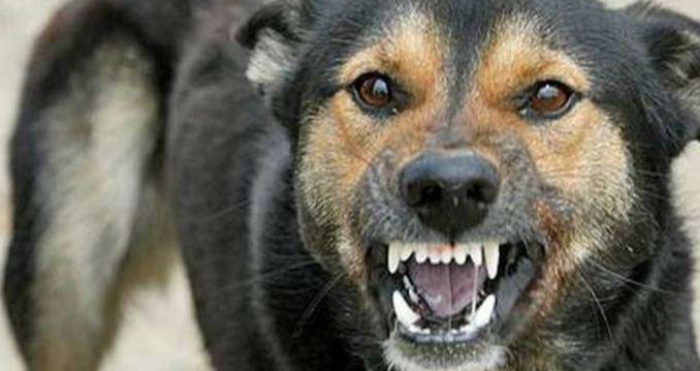 Агресивний собака