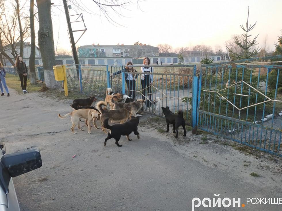 На вулиці Грушевського дівчата ледве встигли сховатися на подвір'ї ветеринарного коледжу.