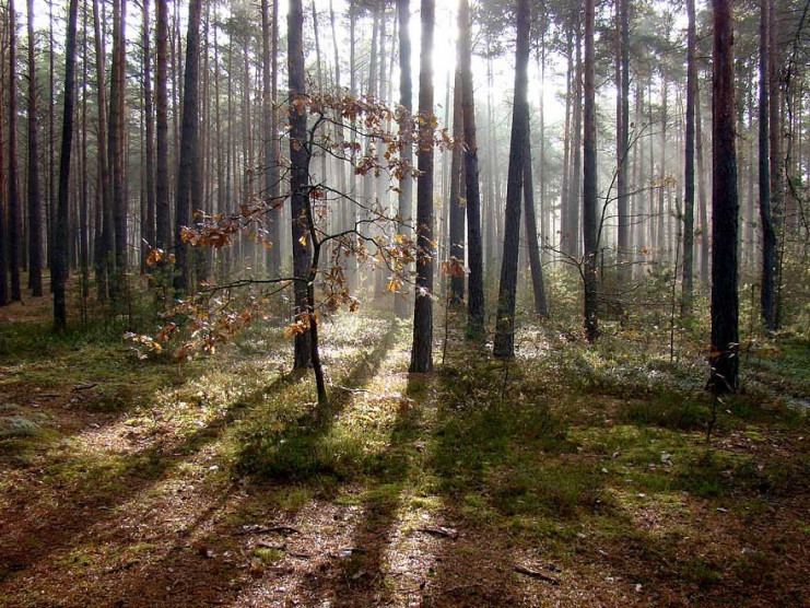 У Рожищенському районі 40 гектарів лісу незаконно віддали фермерському господарству
