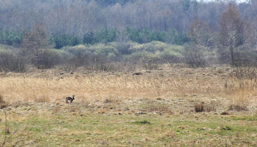 Заєць біля села Ольганівка