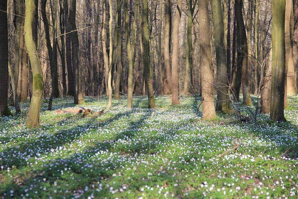 Ліс біля села Олешковичі