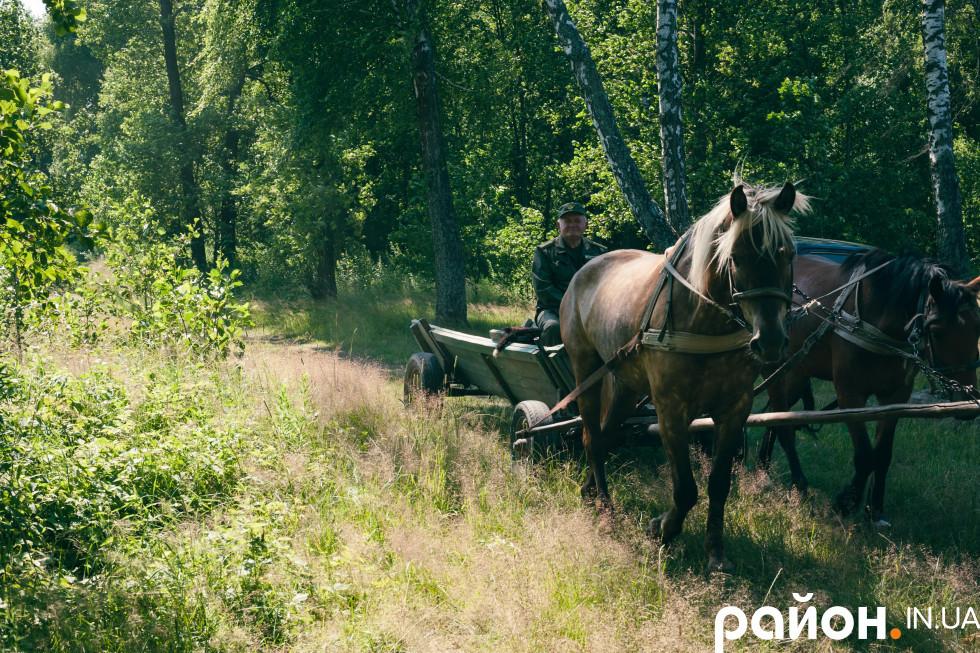 Улюблений транспорт місцевого майстра лісу