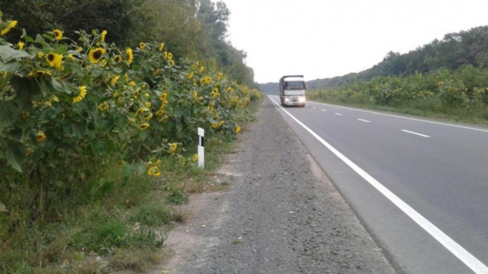 Дорога у період цвітіння соняшників