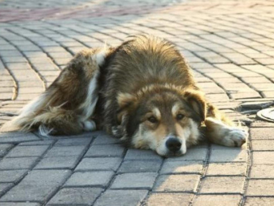 Бездомний пес