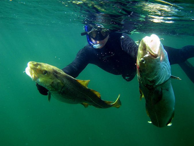Підводне полювання. Фото ілюстративне