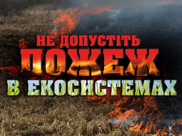 """Результат пошуку зображень за запитом """"Пожежами в екосистемах"""""""