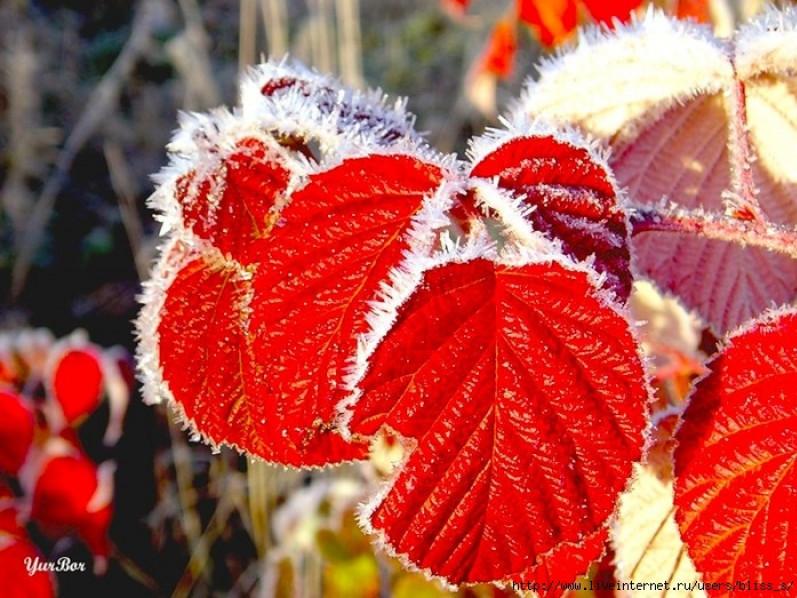 Синоптики передбачають перші заморозки