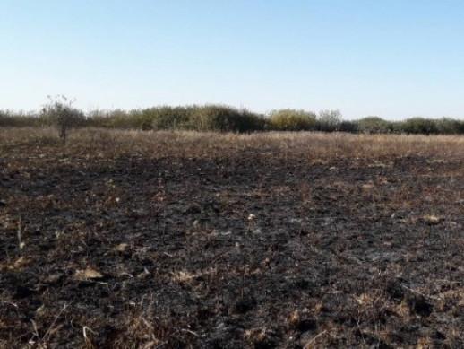 Площа загоряння становила близько 3 гектарів