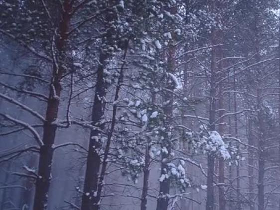 Хлопчик залишився сам у нічному лісі